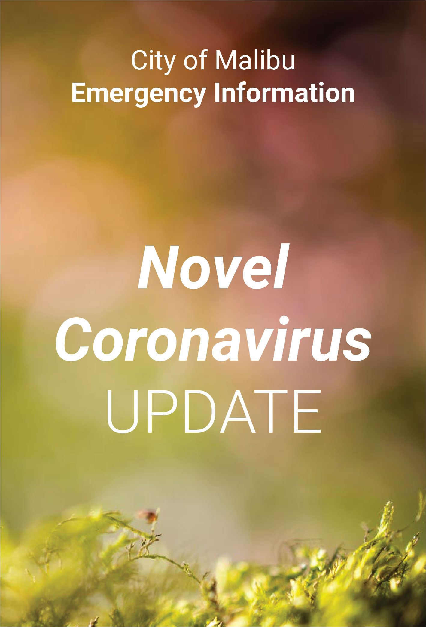 Newsflash Coronavirus-32